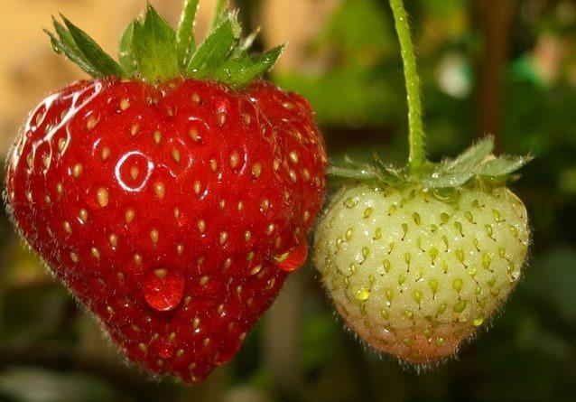 strawberry-1326743-638x590