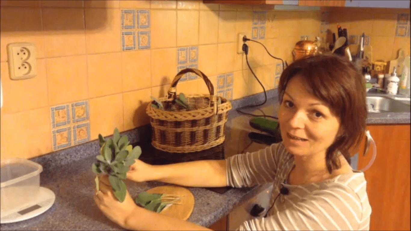 destilace-salvej-miniatura